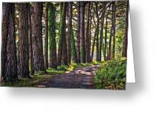 Whiteford Burrows Woods Greeting Card