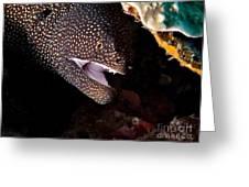 Whitemouth Moray Eel Greeting Card