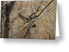 Whitetail Buck Square Greeting Card