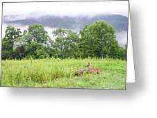 Whitetail Deer 1 Greeting Card