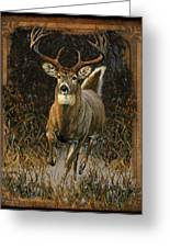 Whitetail Deer Greeting Card
