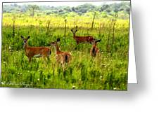 Whitetail Deer Family Greeting Card