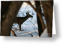 Whitetail Deer Threw The Trees Greeting Card