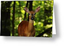 Whitetail Doe Greeting Card