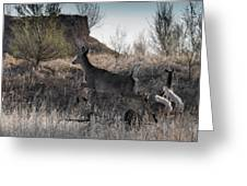 Whitetail In Flight Greeting Card