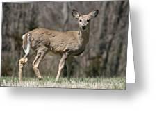 Whitetail Profile 1 Greeting Card