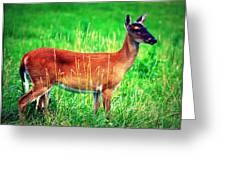 Whitetailed Deer Greeting Card