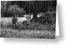 Whitetailed Deers Greeting Card