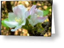 Who Here Has Seen Apple Blossoms In Late Summer Greeting Card