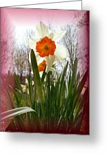 Who Planted Those Flowers Greeting Card