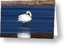 Whooper Swan 2 Greeting Card