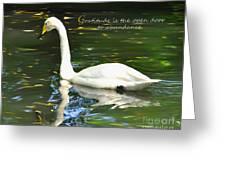 Whooper Swan Gratitude Greeting Card