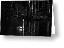 Whooper Swan In Bw 1 Greeting Card
