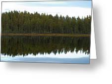 Whooper Swans Panorama  Greeting Card