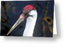 Whooping Crane Mug Shot Greeting Card