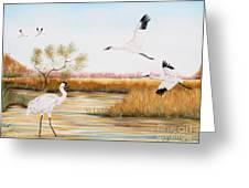 Whooping Cranes-jp3151 Greeting Card
