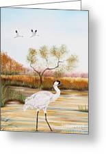 Whooping Cranes-jp3152 Greeting Card