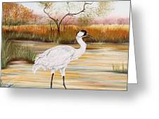 Whooping Cranes-jp3156 Greeting Card