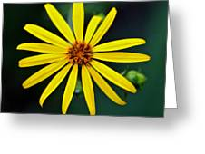 Whorled Rosinweed Greeting Card
