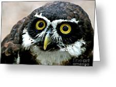 Whos Looking Now Greeting Card