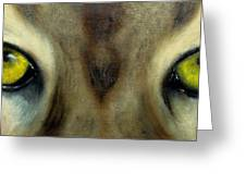 Who's Watching Who...florida Panther Greeting Card