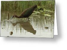 Whtie Faced Ibis 2 Greeting Card