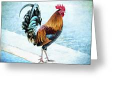 Why Did The Chicken... Greeting Card