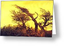 Wicked Trees Greeting Card
