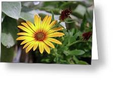 Wide Open In Bloom  Greeting Card
