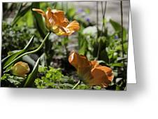Wide Open Tulips Greeting Card