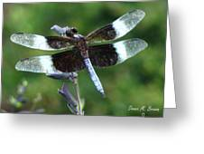 Widow Skimmer Dragonfly Greeting Card
