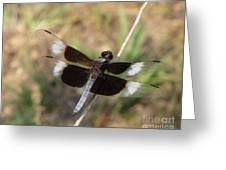 Widow Skimmer Dragonfly Male Greeting Card