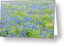 Wild About Wildflowers Of Texas. Greeting Card