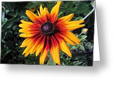 Wild And Crazy Coneflower Greeting Card