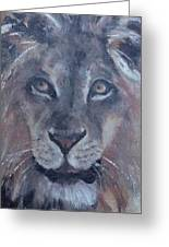 Wild Animal Park Lion Greeting Card