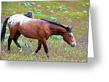 Wild Appaloosa Stallion Greeting Card