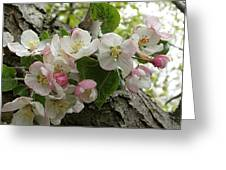 Wild Apple Blossoms Greeting Card