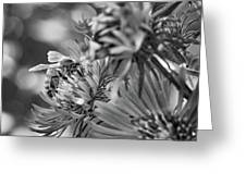 Wild Aster And Honey Bee Bw Greeting Card