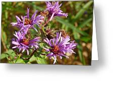 Wild Asters Greeting Card
