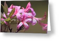 Wild Azaleas Greeting Card
