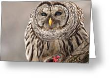 Wild Barred Owl With Prey Greeting Card