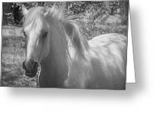 Wild Beauty Bw Greeting Card