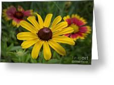 Wild Beauty Greeting Card
