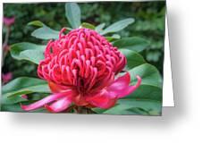 Wild Beauty Watarah Greeting Card