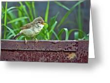 Wild Bird In A Natural Habitat.  Greeting Card