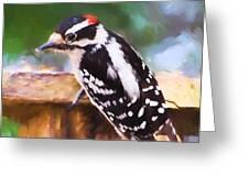 Wild Birds - Downy Woodpecker  Greeting Card