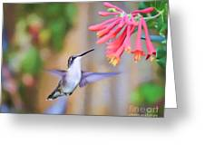 Wild Birds - Hummingbird Art Greeting Card