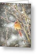 Wild Birds Of Winter - Female Cardinal In The Snow Greeting Card