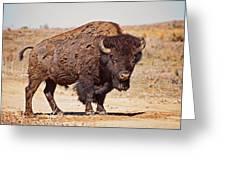 Wild Bison Greeting Card