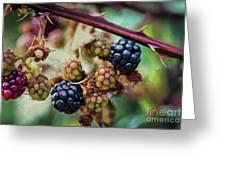 Wild Blackberries Greeting Card
